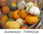 Colorful Ornamental Pumpkins ...