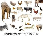 set of farm and wild animals... | Shutterstock . vector #714458242