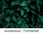 Green Leaves Texture Background ...