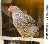 local farm view with chicken.... | Shutterstock . vector #714638002