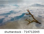 Small photo of The lake. Snag. Reflection.