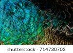colorful of green peafowl bird...   Shutterstock . vector #714730702