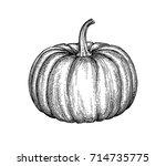 ink sketch of pumpkin isolated... | Shutterstock .eps vector #714735775