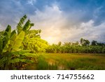 mixed farming by planting... | Shutterstock . vector #714755662