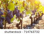 bunch of ripe black grape on... | Shutterstock . vector #714763732