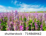 lavender fields | Shutterstock . vector #714868462