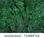 green pine leaves on the ground | Shutterstock . vector #714889726