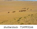 high angle view of large herd... | Shutterstock . vector #714993166