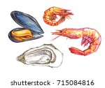 hand drawn seafood on the white ... | Shutterstock . vector #715084816