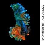 fine art concept close up... | Shutterstock . vector #715095322