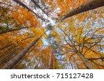 beech forest  sierra cebollera... | Shutterstock . vector #715127428