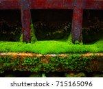 Bright Green Short Moist Moss...