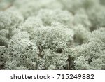Natural Macro Background Of...