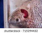 scientist surgery fish for... | Shutterstock . vector #715294432