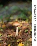 photo of ripe mushrooms in... | Shutterstock . vector #715299805
