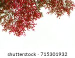 red leaves on the white... | Shutterstock . vector #715301932