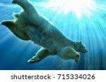Small photo of Polar Bear swimming underwater