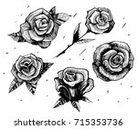 sketch of roses. hand drawn... | Shutterstock .eps vector #715353736