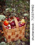 Basket With Mushrooms. Autumn...