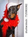 Christmas Dog And  New Year Dog....