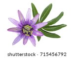 passion flower isolated on...   Shutterstock . vector #715456792