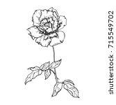 hand drawn black and white rose ... | Shutterstock .eps vector #715549702