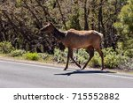 Small photo of Mule Deer, Grand Canyon National Park (south rim), Arizona (USA)