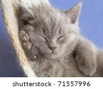 Stock photo sleeping kitten in a hammock 71557996