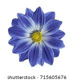 light blue flower daisy on a... | Shutterstock . vector #715605676