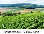 champagne vineyard  france. | Shutterstock . vector #715627345