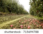 apple orchard. rows of trees... | Shutterstock . vector #715694788