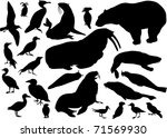illustration with coastal birds ... | Shutterstock .eps vector #71569930