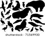 illustration with coastal birds ...   Shutterstock .eps vector #71569930