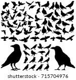 isolated silhouette of doves... | Shutterstock . vector #715704976
