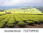 scene of extensive plantation... | Shutterstock . vector #715739932