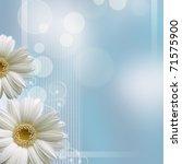 Camomile Flower On Blue...