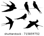 Stock vector set of swallow bird silhouettes vector illustration 715859752