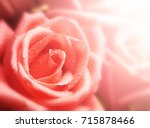 beautiful roses in soft color... | Shutterstock . vector #715878466
