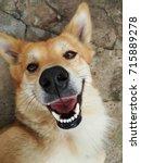 Stock photo smile dog 715889278