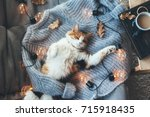 Stock photo lazy cat is sleeping on soft woolen sweater on sofa decorated with led lights winter or autumn 715918435