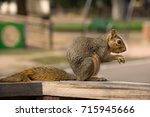 Small photo of Squirrel (Sciuridae) With Playground Background