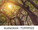Beautiful Banyan Tree In Indian ...
