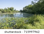 lilly pads on a pond | Shutterstock . vector #715997962
