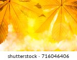 autumn nature background with... | Shutterstock . vector #716046406