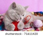 Stock photo british kitten rare color lilac 71611420