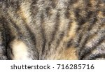 Cat Fur Pattern