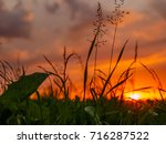 sunset with clouds and grasses | Shutterstock . vector #716287522