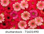 Background  From Gerbera Flower