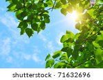green leaves and sun on blue sky - stock photo
