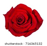 red  rose isolated on white... | Shutterstock . vector #716365132